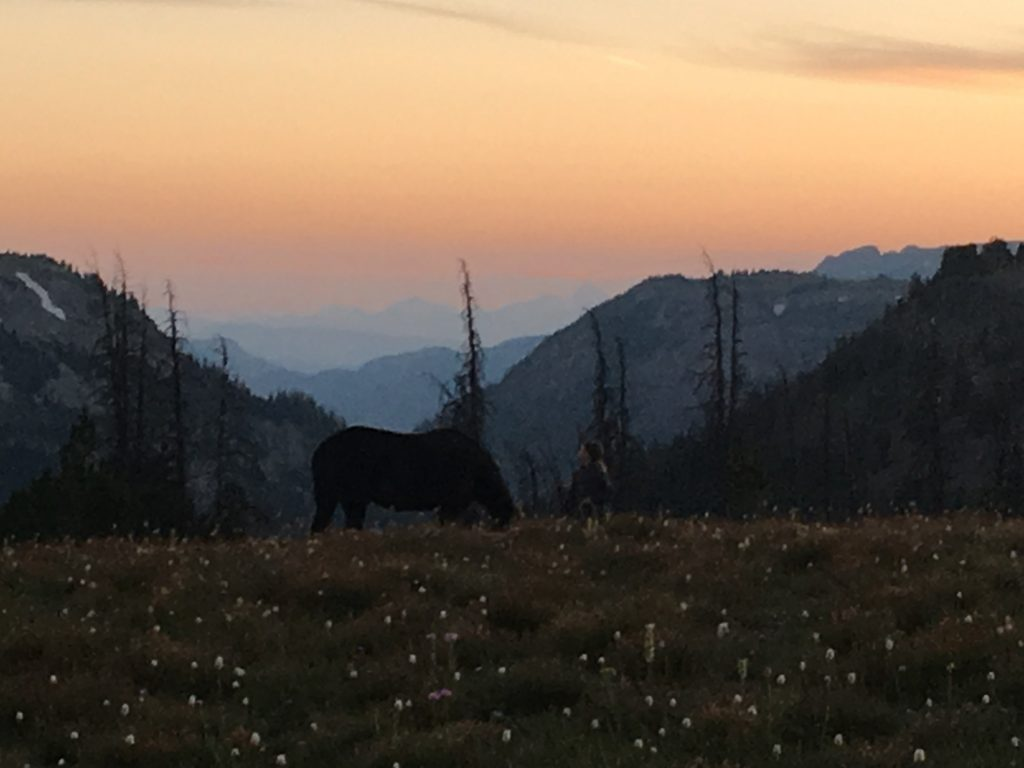 Pack and hunting trips in Shoshone Forest, Yellowstone Country