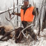 307 outfitters Cody Wyoming Trophy bull elk harvested in Yellowstone country
