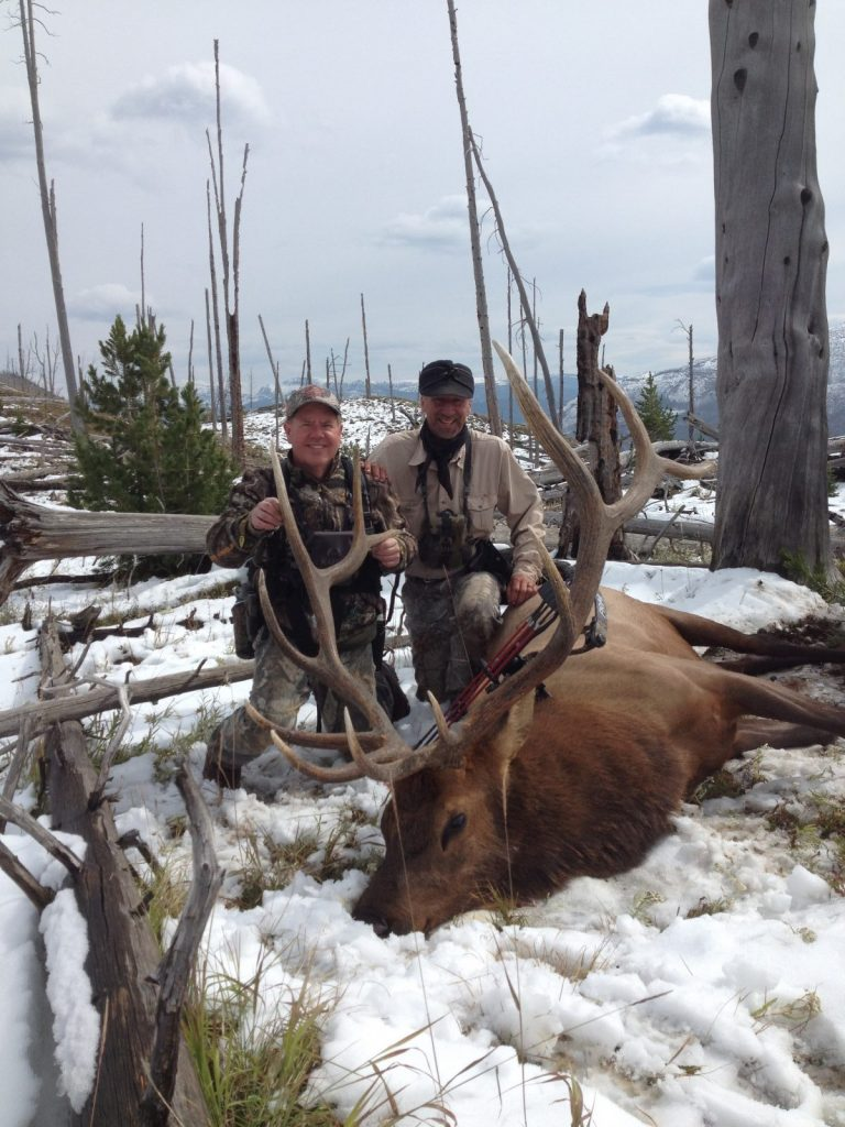 Trophy bull elk harvested in Shoshone national forest, Yellowstone Country Wyoming. Guided by Scott LaFevers of 307 Outfitters