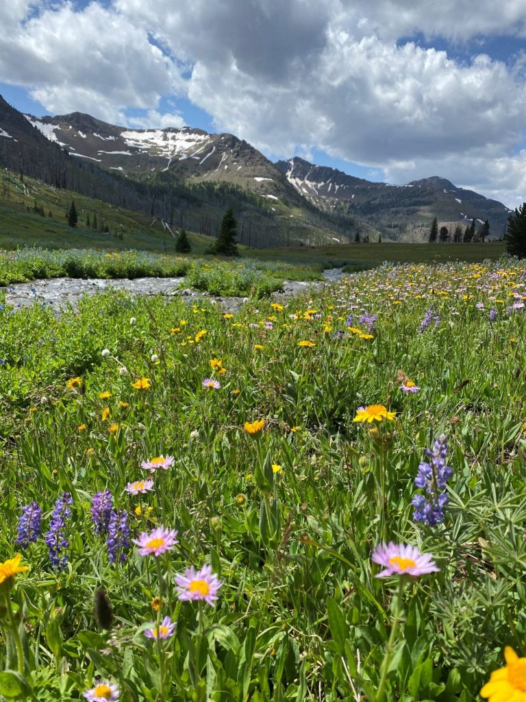 Wildflowers Silver tip Basin during Grizzly Bear Viewing Adventure with 307 Outfitters in Wyoming